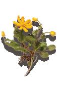 Lesser Celandine Knitted Flower