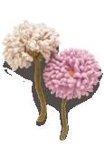 Pom-Pom Chrysanthemum Knitted Flower