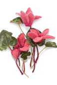 Cyclamen Knitted Flower