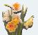daffodilthumb1
