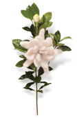 Gardenia Knitted Flower