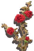 Rose Knitted Flower