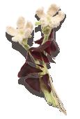 Purple Shamrock Knitted Flower