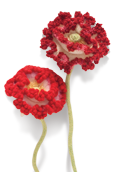 Shirley Poppy Knitted Flower