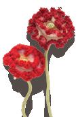Shirley Poppy Knitted Flower