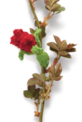 Sweetheart Rose Knitted Flower