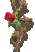 Sweetheart Rose Knitted Flower
